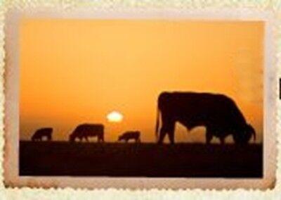 livestock_pet_supply