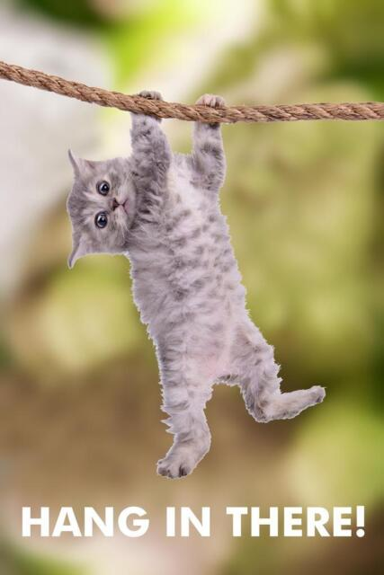 Hang In There! Cat Retro Motivational Poster - 24x36