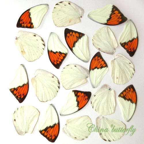 20 REAL BUTTERFLY wing jewelry artwork material ooak DIY gift #33