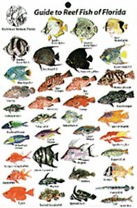 Guide to Reef Fish Florida ID Card Travel 6x9 NEW B202