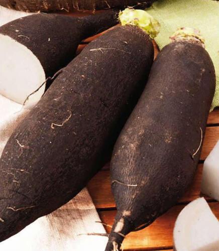 seeds Nabo Negro Azucarado 2.000 semillas Nabos Turnip Black Sugary