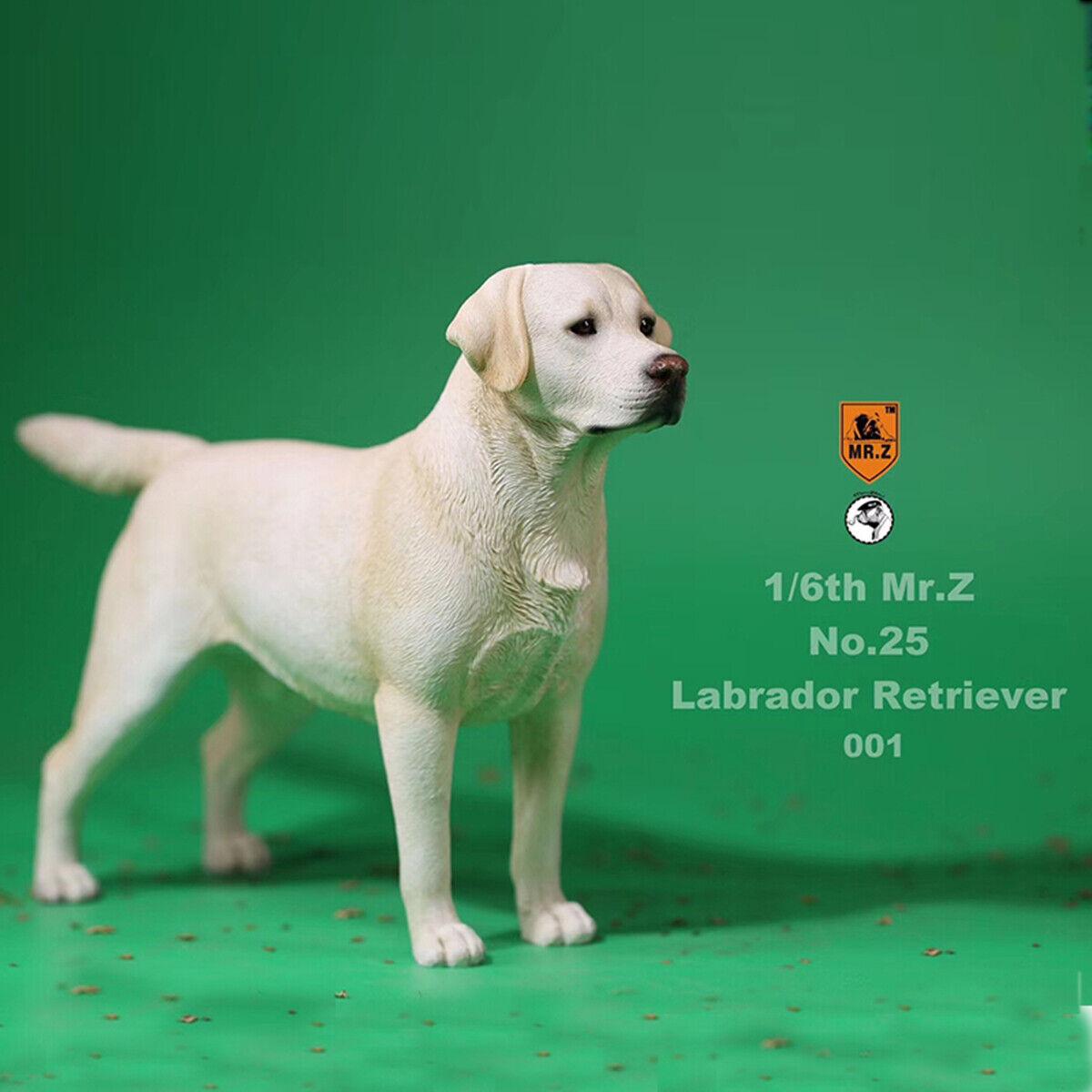 Mr.Z 1 6 Labrador Retriever Loyal Dog Pet Figure Animal Decor Model Toy Kid Gift