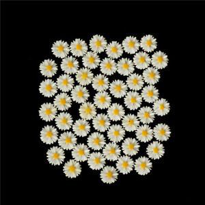 50Pcs-Blanc-Marguerite-Fleur-Resine-Flatback-Cabochon-Bijoux-Bricolage-Decora-FE