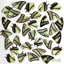 32 pcs REAL BUTTERFLY wing jewelry butterfly material ooak fairy DIY artwork  #6