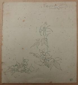 Dessin Ancien Étude De Fleurs Louis Maurice Boutet De Monvel C.1890 Xixe #5 êTre Hautement Loué Et AppréCié Par Le Public Consommateur