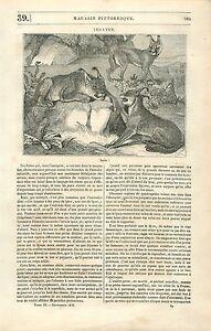 Les Lynx Chat sauvage Mammifère GRAVURE ANTIQUE OLD PRINT 1835 - France - Lynx Wild Cat MammalArticle Complet ANTIQUE PRINT GRAVURE 100 % DÉPOQUE 1835 PORT GRATUIT EUROPE A PARTIR DE 4 OBJETS BUY 4 ITEMS AND EUROPE SHIPPING IS FREE Il s'agit d'un fragment de page originale avec texte au dos qui n'a rien voir avec l'im - France