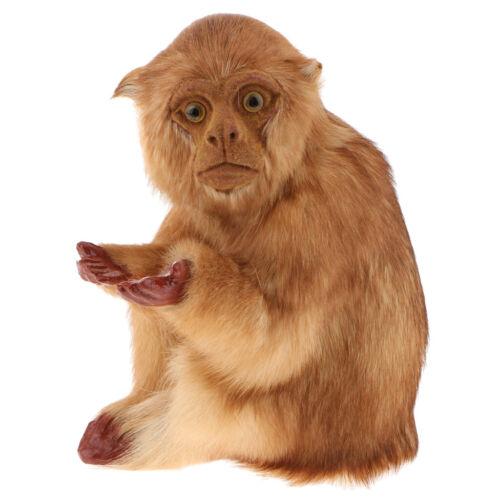 wie eche aussehen, Dekofigur sitzend Affe Tierfigur Garten Wohnung Tierdeko