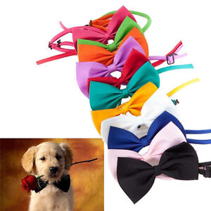 Dog-Cat-Accessories-Bow-Tie-Adjustable-Collar-INT