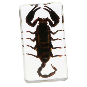 Real Insect Paperweight Black Scorpion
