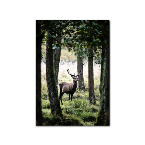 Nature Landscape Poster Lake Forest Canvas Wall Print Nordic Decoration Picture