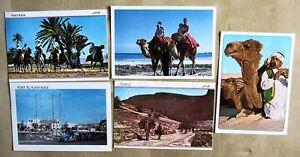 Lot-Sammlung-Postkarten-5x-TUNISIE-Tunesien-Afrika-ua-Wueste-Kamel-Reiter-uvm