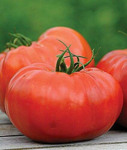 Delizia Hybrid Tomato Seeds