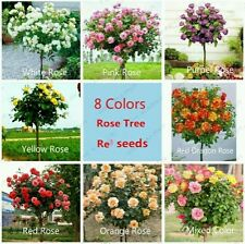 8 DIFFERENT TYPES RARE ROSE BONSAI TREE SEEDS ( 7 SEEDS EACH )