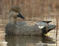 Avery Greenhead Gear Ghg Pro Grade Pg Gadwall Floater Duck Decoys 6