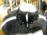 Skunk Fur Hat With Full Face Handmade Large Hat 1000