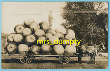 EXAGGERATION RPPC by Martin ~ Carting Apples ~ Real Photo POSTCARD