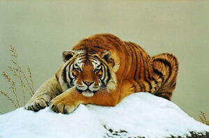 Fine-Oil-painting-wild-animal-wildlife-yellow-tiger-in-winter-snow-canvas-36-034