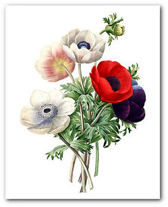 Poppy bunch print botanical flower illustration 8 x 10 inches image is loading poppy bunch print botanical flower illustration 8 x mightylinksfo