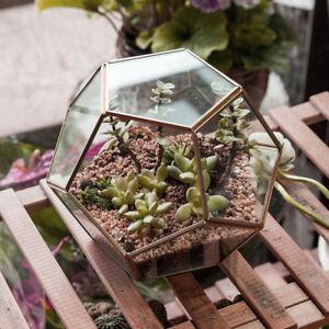 Dodecahedron Globe Geometric Glass Terrarium Succulent Flower Pots