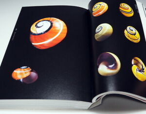 The-Beautiful-Shell-in-the-world-book-bivalve-shellfish-univalve-0989