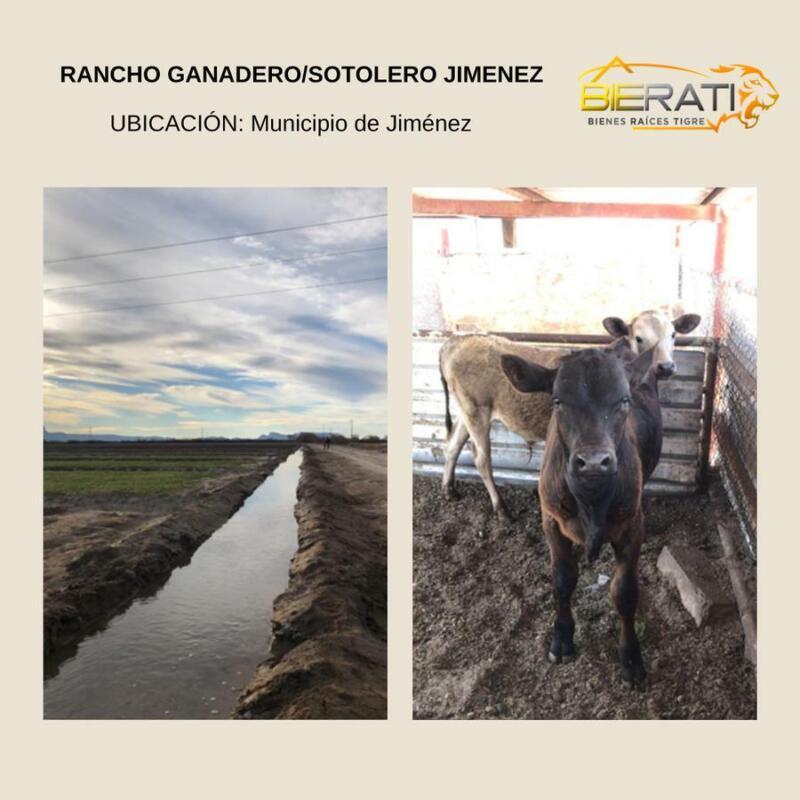 Rancho Ganadero/Sotolero en Jiménez, Chihuahua