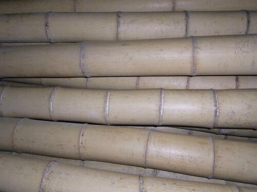 Bambusrohr Bambusstange Bambushalm Bambus Riesenbambus 1 x 8-9 cm x 2 m !