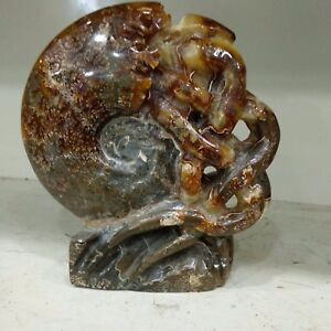 Ammonite-Fossil-Shell-Jurassic-Fossil-Specimen-withTentacle-Madagascar-150MM