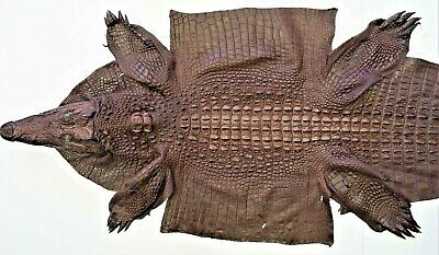 Genuine Crocodile Leather Hide rug skin gift animal Unique Exotic CITES 60 cm
