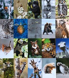 Postkarten-Set-A6-40-Postkarten-10-5-x-14-8-cm-Tiermotive