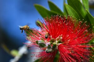 24-034-X-30-034-High-Definition-PHOTOGRAPH-Poster-of-Honey-Bees