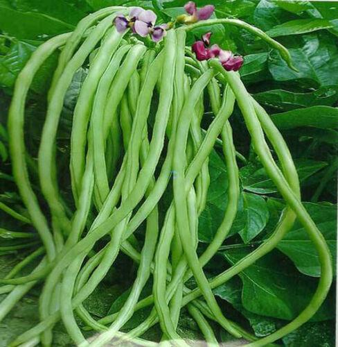 Spring Chinese Vegetable Seeds yard garden Colorful package 原厂彩包阳台春夏播蔬菜黄瓜种子籽