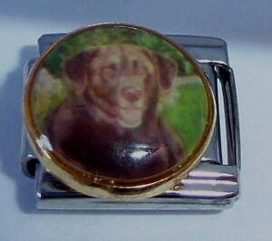 Italian-Charms-DG116-Brown-DOG-Labrador-Retriever