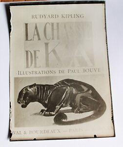 Rare-lot-photos-d-039-epoque-Paul-JOUVE-la-Chasse-de-Kaa-Theme-JUNGLE-et-PANTHERE