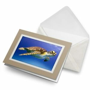 Greetings-Card-Biege-Cute-Sea-Turtle-Ocean-Nature-2051