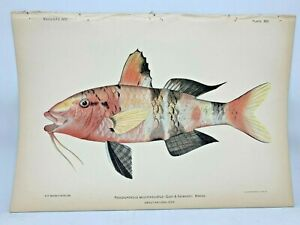 Antique-Lithographic-Print-Reef-Fishes-Hawaiian-Islands-Bien-1903-Plate-22