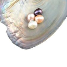 50Pcs Freshwater Akoya Oysters with Large Oval Pearl inside Gifts 6-7mm RB US