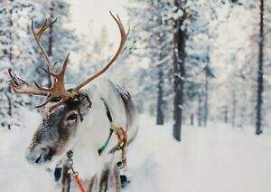 A1-Winter-Forest-Reindeer-Poster-Size-60-x-90cm-Christmas-Poster-Gift-16651