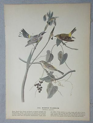 "1942 Vintage AUDUBON BIRDS #117 /""MISSISSIPPI KITE/"" Color Art Plate Lithograph"