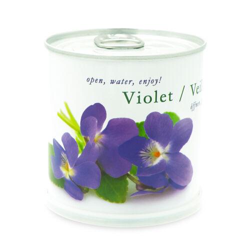 Veilchen Blumen in der Dose von MacFlowers