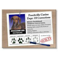 Dachshund Rap Sheet Fridge Magnet No 1 Doxie Dog Funny