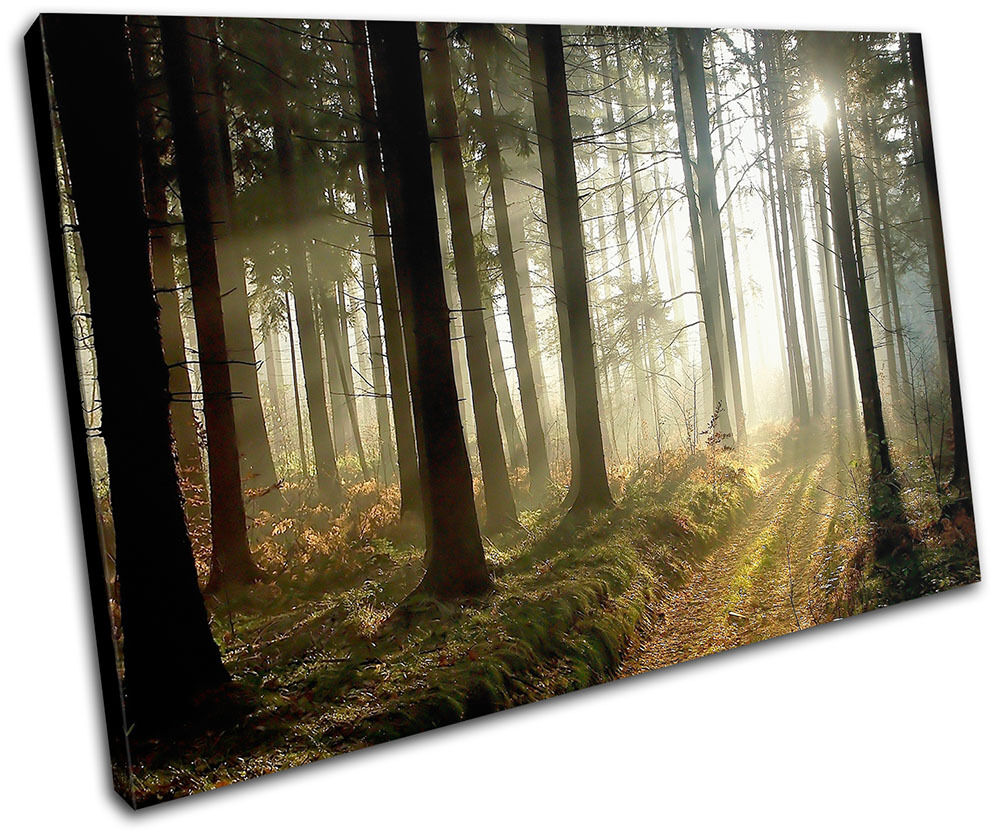 Woodland Forest Landscapes SINGLE Leinwand Wand Kunst Bild drucken