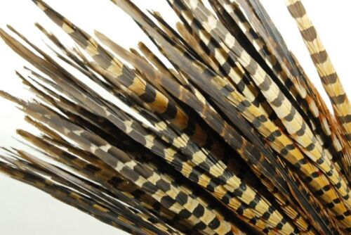 "50 Pcs ENGLISH RINGNECK PHEASANT Natural Feathers 16-18/"" Halloween//Costume//Craft"