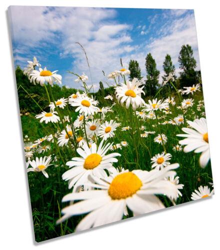 Daisy Flower Field Summer Square TOILE murale ART Photo Print