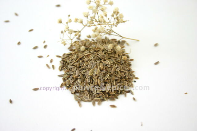 ANETH graine   30 g  dill seeds