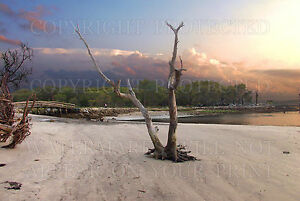 Jekyll-Island-Georgia-GA-Driftwood-Beach-sunset-photo-5x7-or-request-8x10-or-CD
