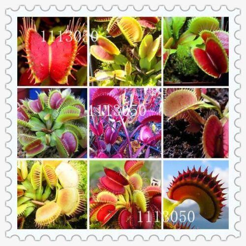 100 Seeds//pack Grass Family Food Cordyceps Seeds Weird Magic Venus Flytrap Seed