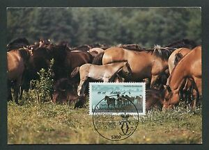 Radient Brd Mk 1987 Wildpferde Pferd Horse Maximumkarte Carte Maximum Card Mc Cm D6887 Topical Stamps