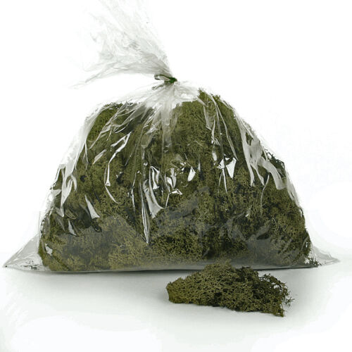 Rentierflechte 450 g Getrocknet Konserviert Grün