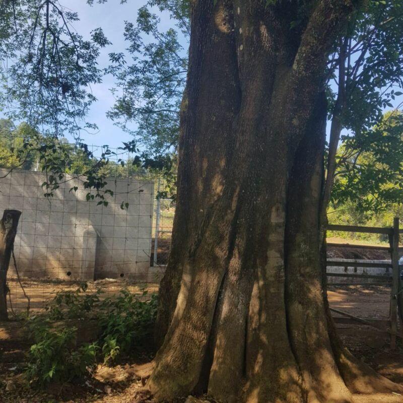 Terreno en venta en Cuadrilla de Dolores, Valle de Bravo.