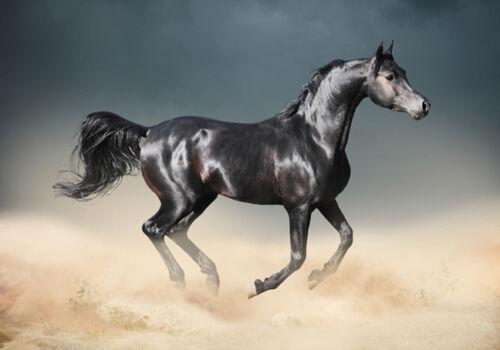Stallion Spirited Horse Desert Nature Freedom Art Canvas Print A3